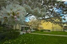 Baden-Baden - Trinkhalle im Frühling