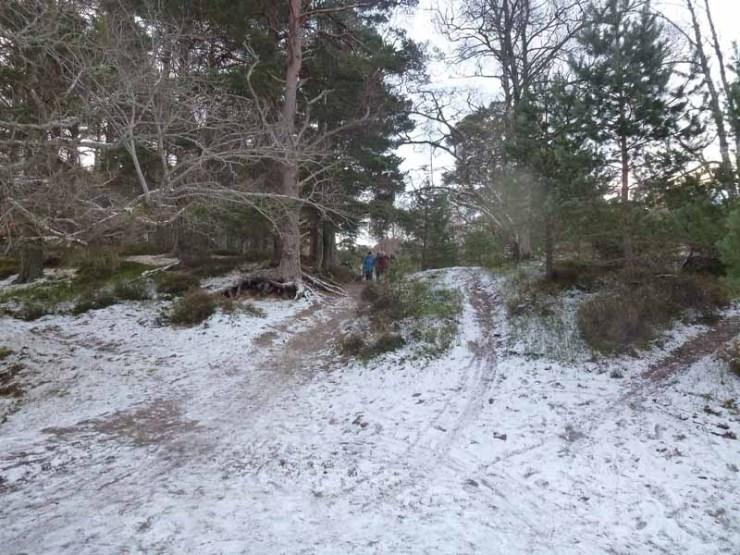 46 New Year Walk Lily Loch 301217