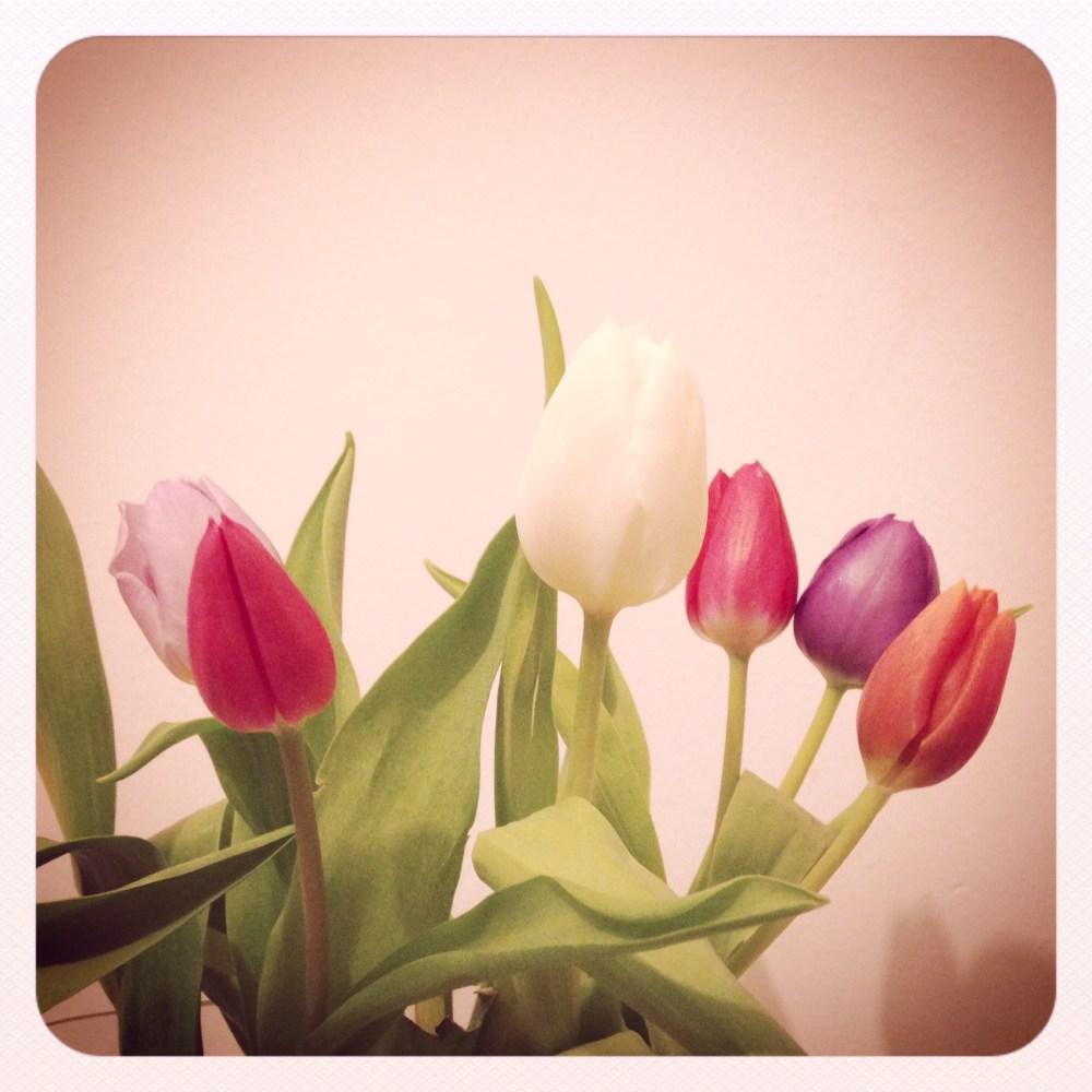 Tulipani d'acqua e aria