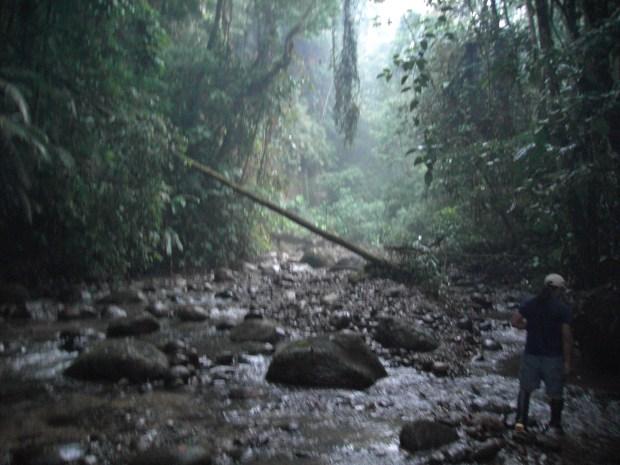 Jungle tour - Banos, Ecuador