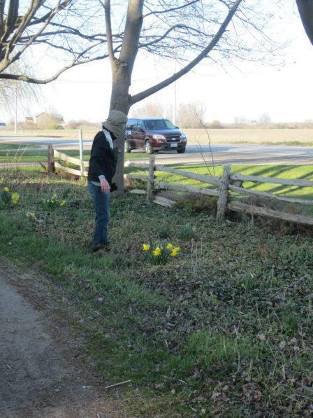 Stomping tulips