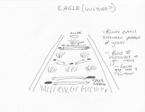 Final stage eagle/vulture area concept