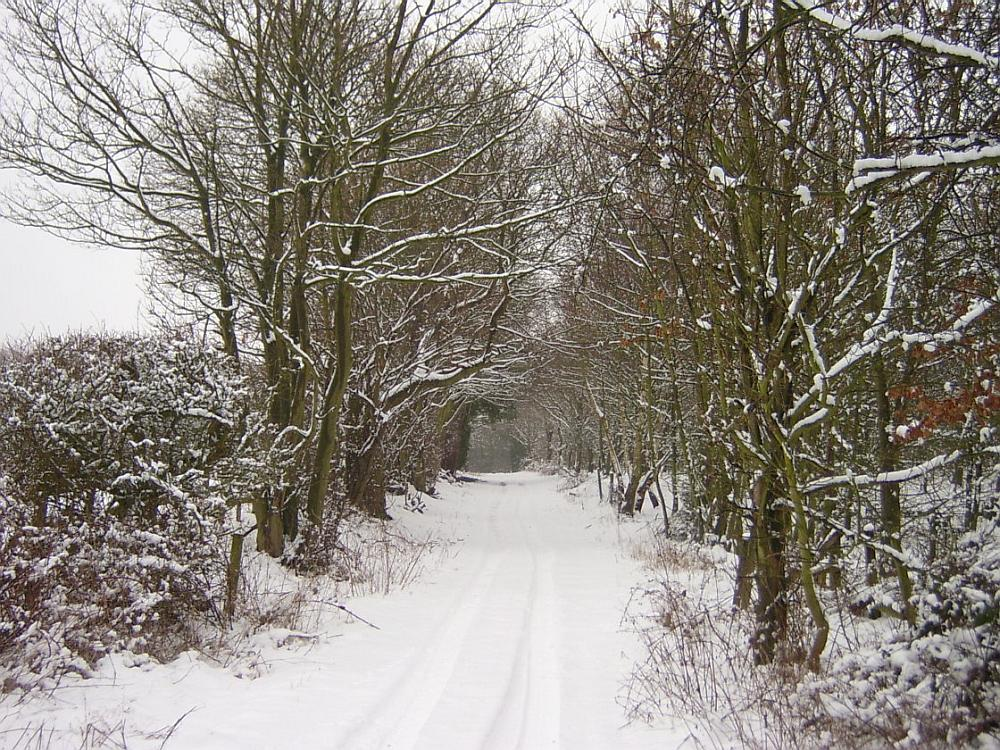 snowy-lane