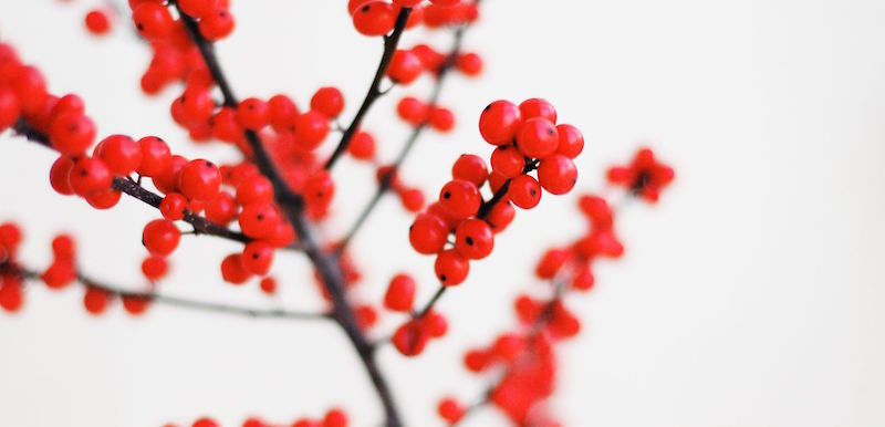 red holidays unsplash