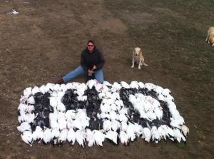 Snow Geese Hunt