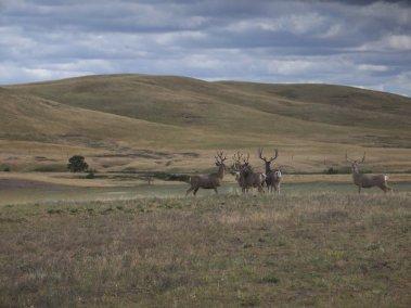 deer-hunting-2008_3267320486_l