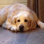 Jill, een blog over mijn hond_blog badschuim.eu