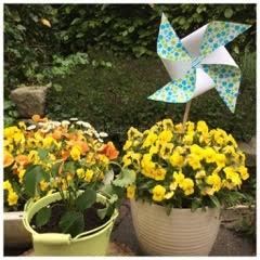 Windmolentje zelf maken – gastblog van Janet