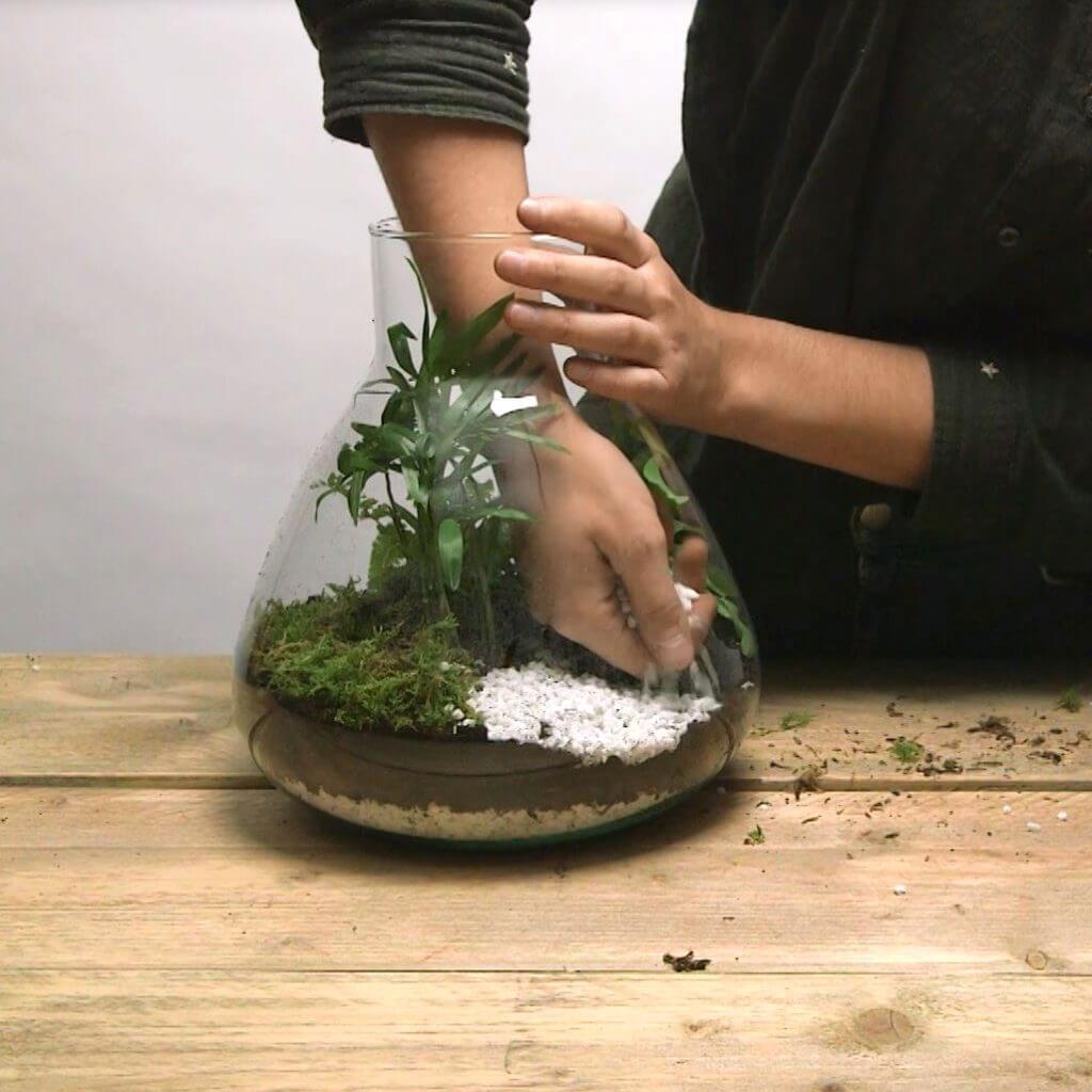 Plantjes planten
