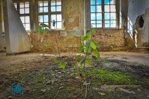 Landschaft-Baer.Photos-Fotograf-Holger-Bär-Lost-Place-Architektur-Natur-Kent-School