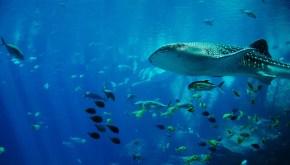 whale-shark-281498_1920