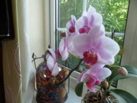 Close up of Mommy's Orchid