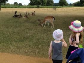 Deer watching