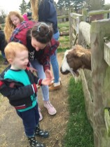Feeding the goat
