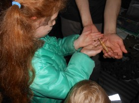 Holding a stick insect