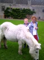 A Shetland pony