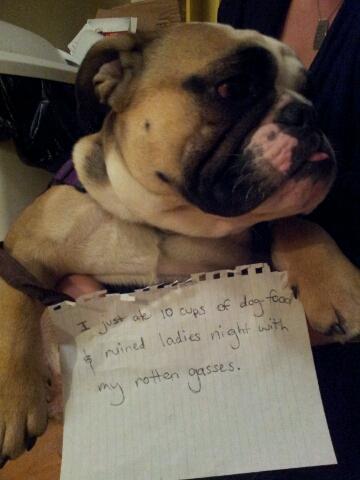 BaggyBulldogsWallofShame