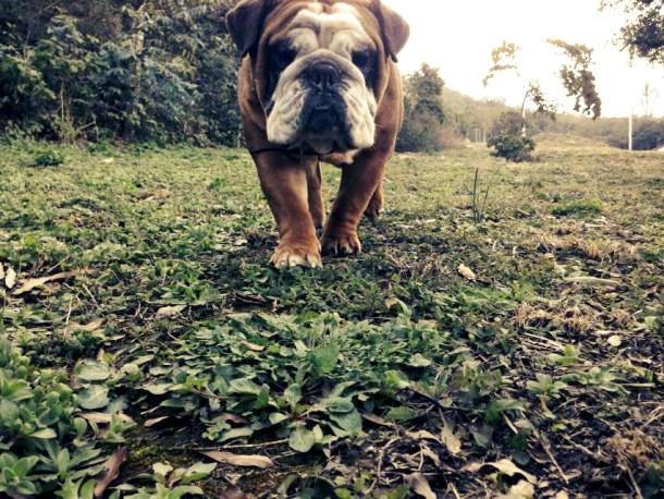 Bulldogs of Baltimore