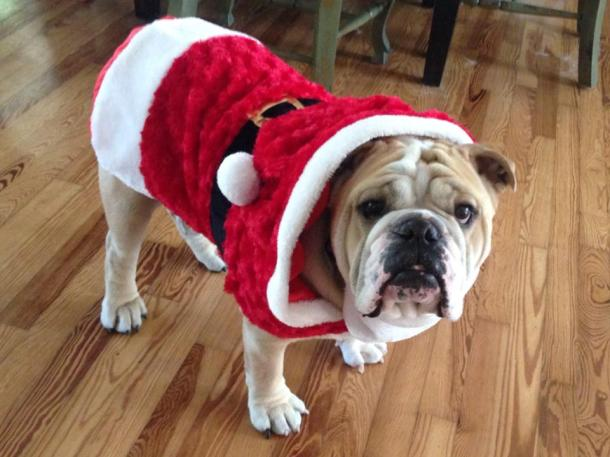 Baggy Bulldog