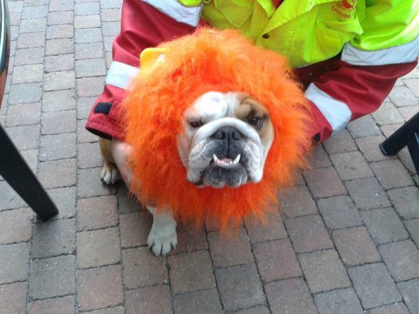Baggy Bulldogs Rescue Nederland
