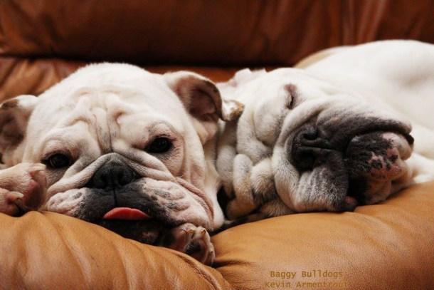 Baggy Bulldogs