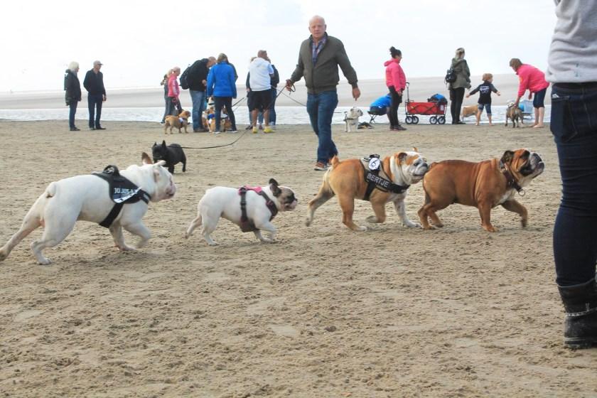 Baggy Bulldogs Beach Walk 2016