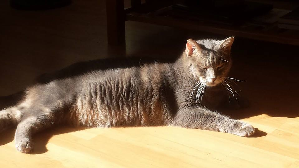 Please help this diabetic cat enjoy the sun puddle more