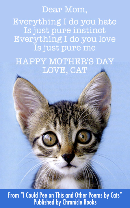 A Cat's Happy Mother's Day Wish