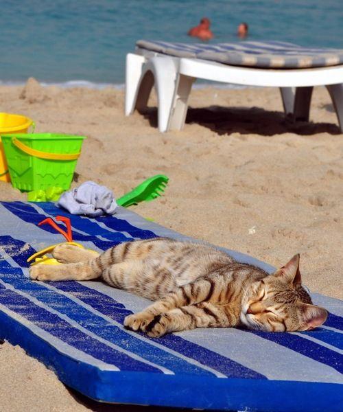 Cat Relaxing at Beach