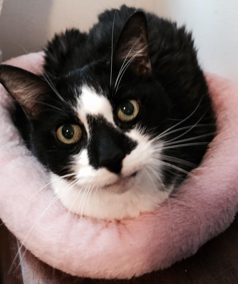 Oscar Saved by Michigan Cat Rescue