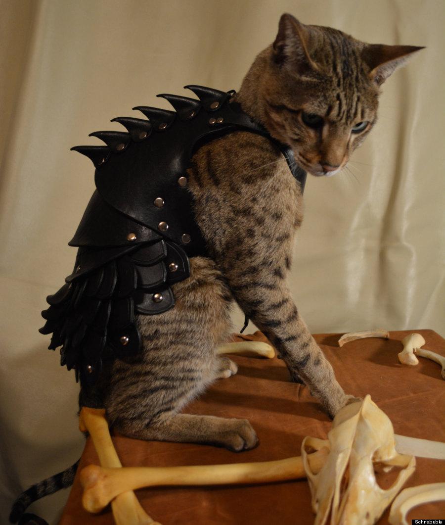 Pet Costume Contest Winner Selani