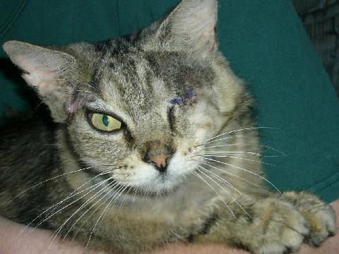A Special Needs Cat with One Eye