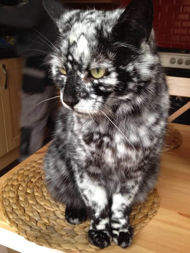 Scrappy's Vitiligo Is Changing His Fur Color