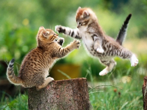 Cats Chasing Each Other