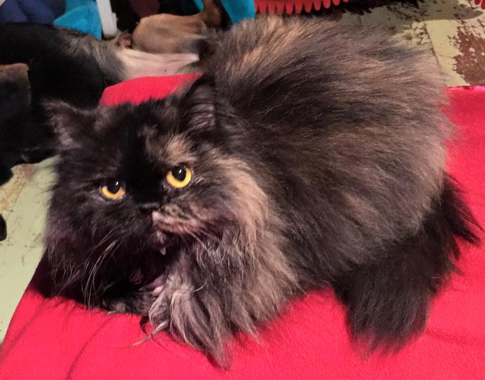 Special Needs Cat Freida Does Not Have FIP