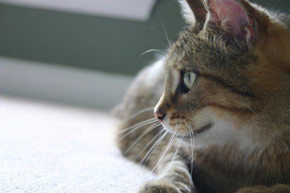 Separation Anxiety: A Cat Missing Their Human
