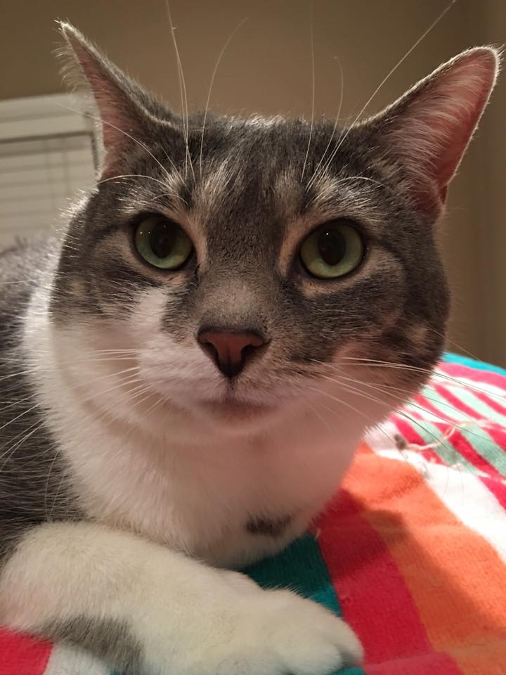 Michigan Cat Rescue Is Seeking a Home for Lila