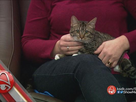 Special Needs Cat Selkie