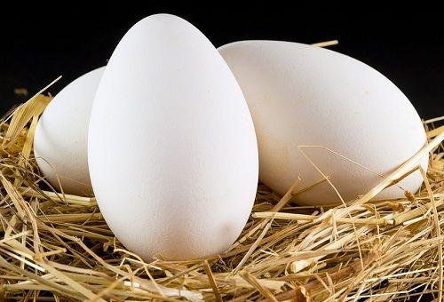 Æg køleskab udenfor kogte holdbarhed kogt æg