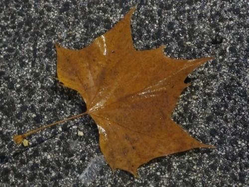 20120117-090619.jpg