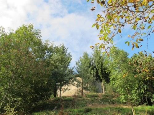 20121029-082444.jpg