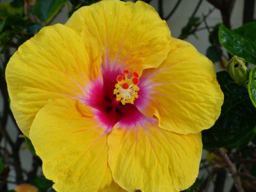 # summer flowers