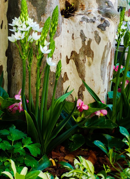 Spring Brisbane