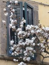 Corso Garibaldi Lucca