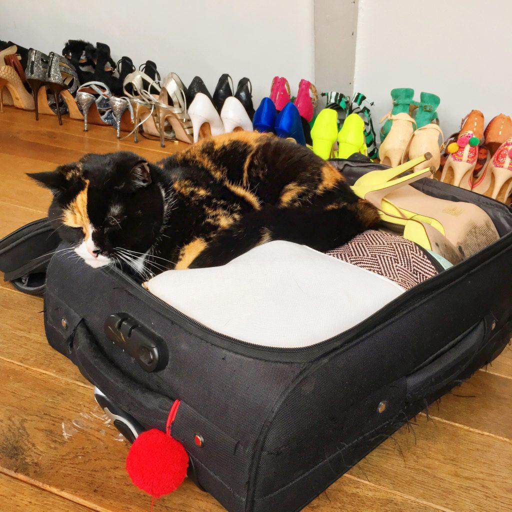 huisdier reizen poes disco