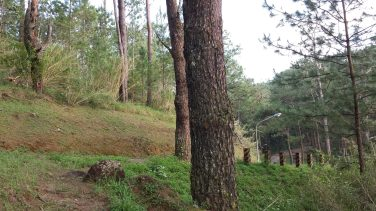 yellow trail camp john hay baguio (15)