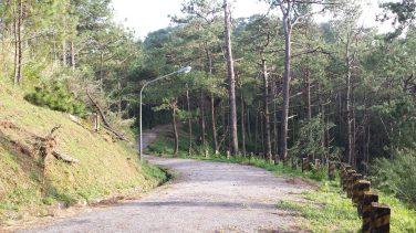 yellow trail camp john hay baguio (16)