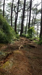 yellow trail camp john hay baguio (2)