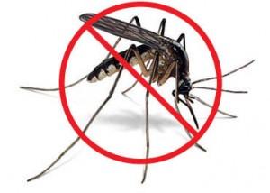 cara membasmi nyamuk dengan permethrin