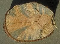Jamur blue stain hanyalah salah satu alasan pentingnya pengawetan kayu pinus.